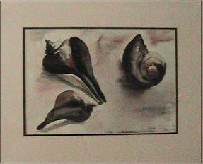 Shells in watercolor by Miriam Cohen